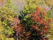 fall colors, 11-5-2017