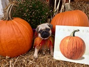 Happy Fall, y'all!