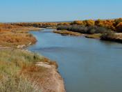 Rio Rancho Bosque