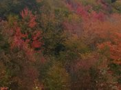 Fall Foliage NH 2017