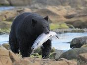 1d. Big fish, bigger bear