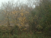 Autumn Fog and Paper Mulberry