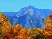 Fall time Sandia