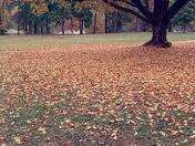 Fall at Grimsley High School