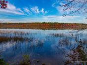 Turkey Pond
