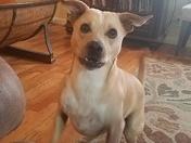 My Dog Chesney