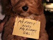 Teddy Stinks!!