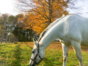 grazing through fall