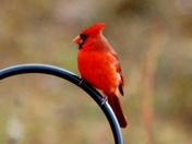 Birds, 11-14-2017