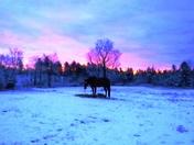 First snow 2017 & sunrise Acton, ME