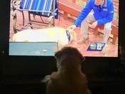 TV Fan