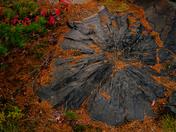 Meteor Shatter Cone/Sudbury On