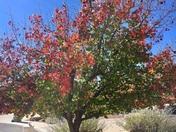 Three Season Tree