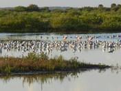 Merritt Island Nat'l Wildlife Refuge