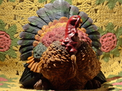 What A Turkey
