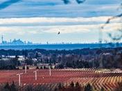 Flight Niagara to Toronto