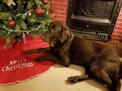 Merry Christmas from my dog Hershey
