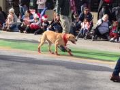Santa Cruz Christmas Parade 8
