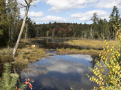Algonquin in Autumn