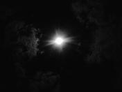 Moon Fire