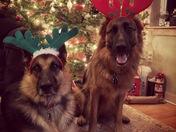 KodaMax at Christmas