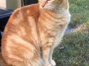 Missy Cat