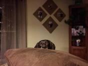 Peek-a-Boo Pup