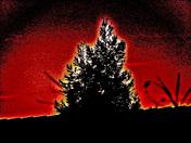 ROOFTOP CHRISTMAS TREE @ SUNDOWN
