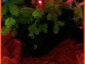 RayRay under the tree