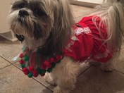 Prissy wearing new Christmas dress