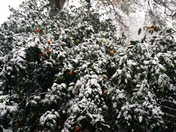 Snow in Ponchatoula