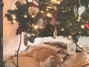 My cat under Christmas tree