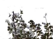 Snow 2017