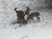 deer in Dora