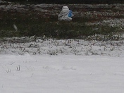 Snow in madisonville!