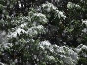 Snow day in SC!
