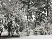 Snow !!