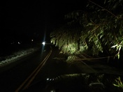 Watch out for down trees and branches