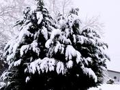 White Christmas 2017