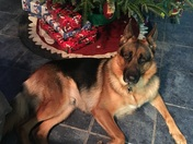 Picture of Dez in front of our Christmas Tree!