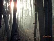 Sunrise on the Toadstool Tree