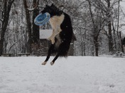 Josey playing frisbee in the snow
