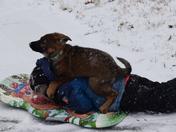 Puppys forst snow.