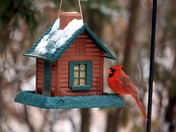 Log Cabin Feeder and Cardinal
