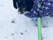 Snow From Benji