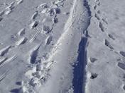 fun it the snow