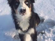 Dex's first snow!