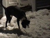 Hurricane Harvey puppy's 1st snow