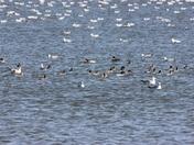 Overholser Birds