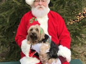 Santa & Dogs @ Paws on Pine